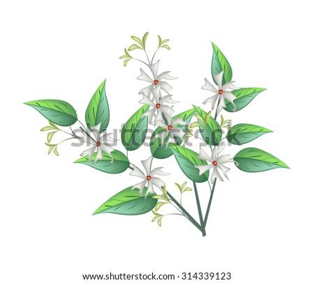 beautiful flower  bunch of