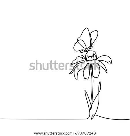 beautiful flower echinacea with