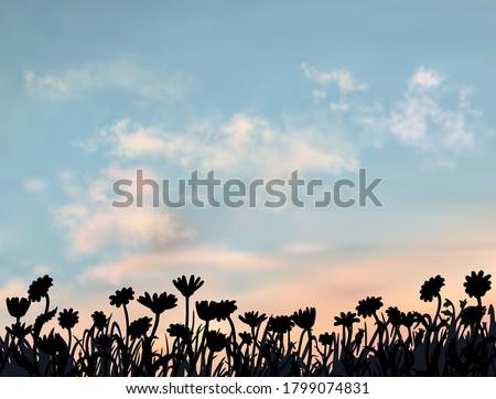 beautiful flower field under