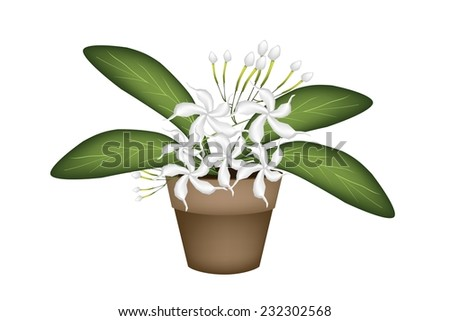 Beautiful Flower, Illustration of Lovely White Common Gardenias or Cape Jasmine Flowers in Terracotta Flower Pot for Garden Decoration.