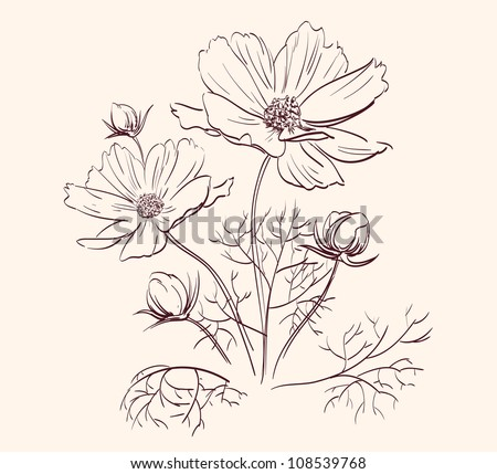 Beautiful Flowers  drawing vector illustration  isolated