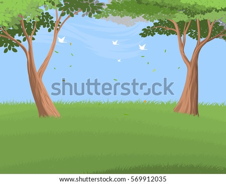 beautiful forest trees scenery