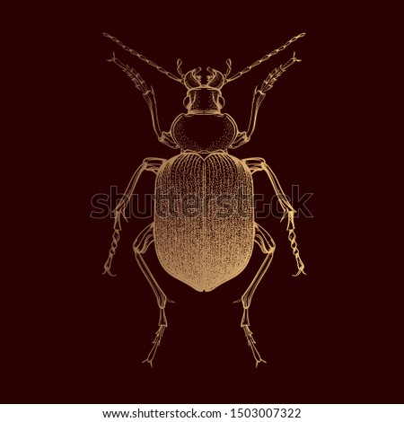 beautiful gold beetle on a