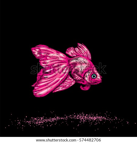 beautiful goldfish vector