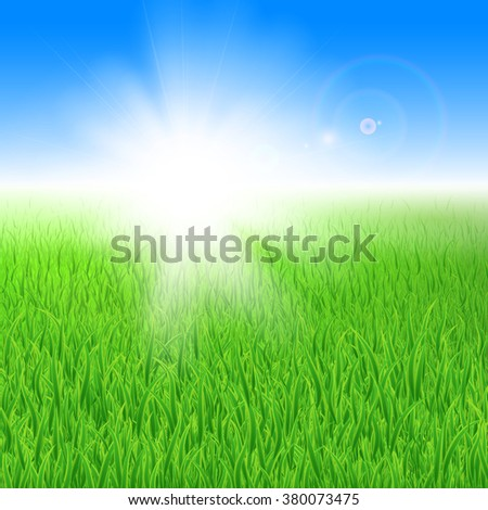beautiful green lawn with grass