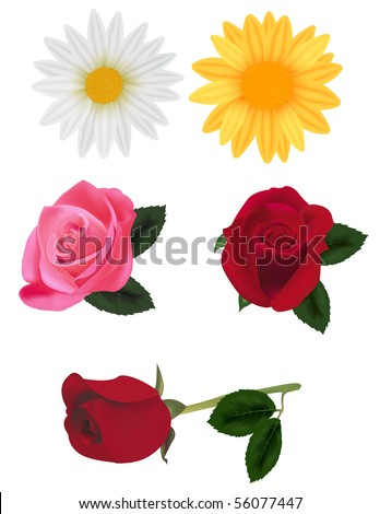 Beautiful group of flowers isolated on the white. Photo-realistic vector illustration.