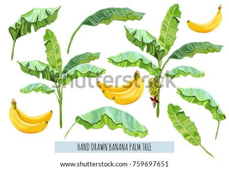 beautiful hand drawn botanical