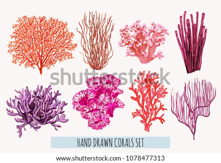 Beautiful hand drawn botanical vector illustration with tropical corals. Isolated on white background.