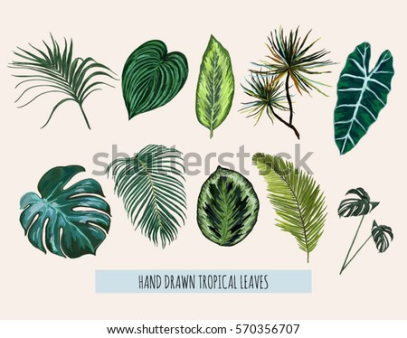 Beautiful hand drawn  botanical vector illustration with tropical leaves. Isolated on white background.