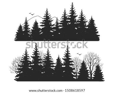 beautiful hand drawn forest fir