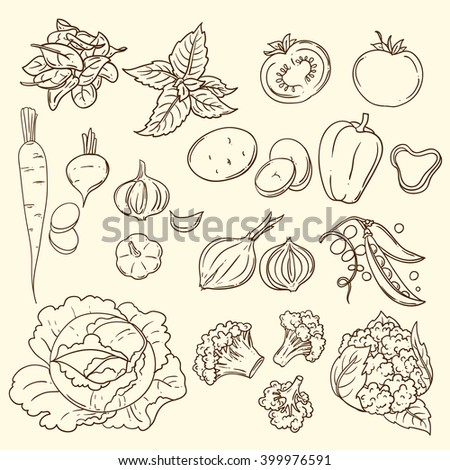 Beautiful hand drawn illustration vegetables. Food top view  #399976591
