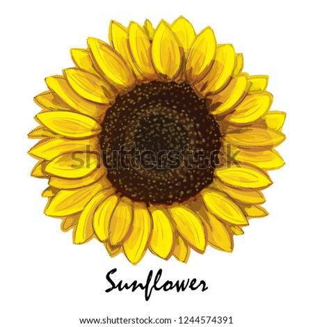 beautiful hand drawn sunflower