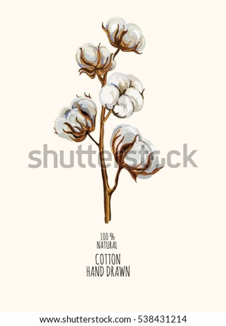 Beautiful hand drawn vector illustration of cotton branch. Hand drawn boho chic style design elements. Perfect for wallpapers, web page backgrounds, surface textures, textile.
