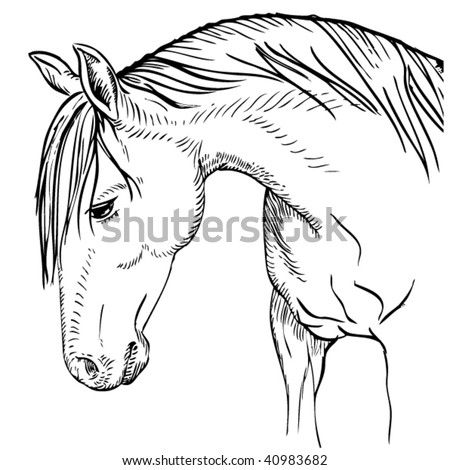 stock vector : Beautiful horse drawing