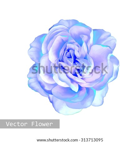 beautiful light blue rose