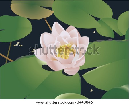 Beautiful Lily Lotus.  A beautiful realistic illustration of a lily or lotus and lily ads floating on a pond. No meshes used