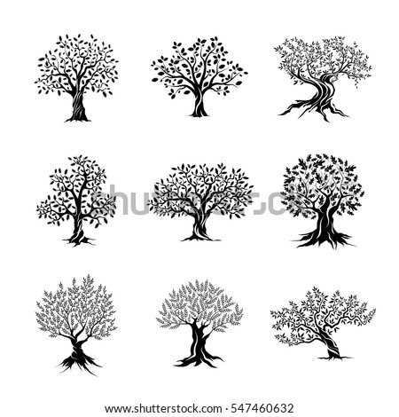 Beautiful magnificent olive and oak trees silhouette isolated on white background. Web infographic modern vector tree sign. Premium quality illustration logo design concept pictogram set.