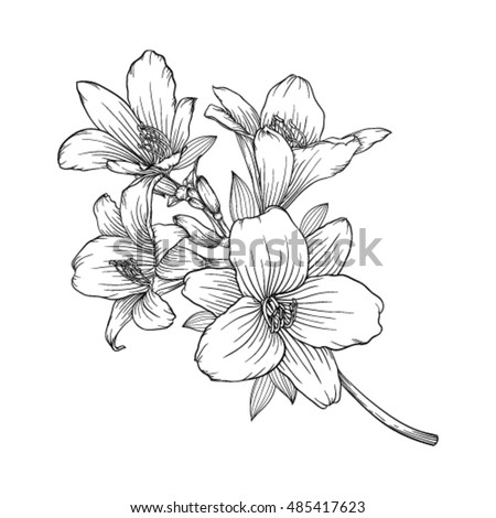 beautiful monochrome black and white bouquet lily isolated on background. Hand-drawn. design greeting card and invitation of the wedding, birthday, Valentine's Day, mother's day and other holiday #485417623