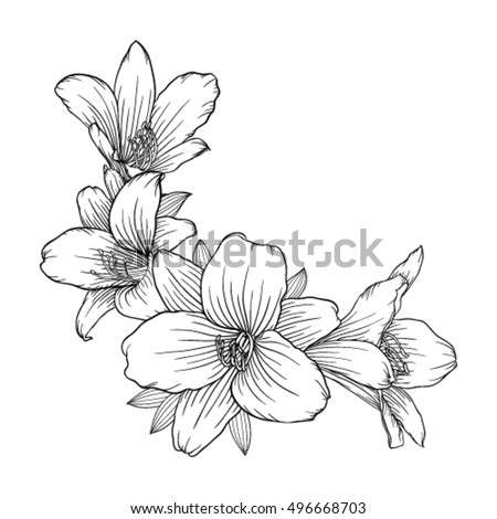 beautiful monochrome black and white bouquet lily isolated on background. Hand-drawn. design greeting card and invitation of the wedding, birthday, Valentine's Day, mother's day and other holiday #496668703