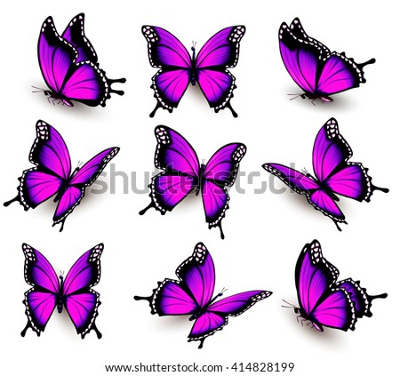 beautiful of pink butterfly in
