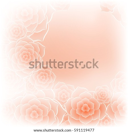 beautiful orange rose flower