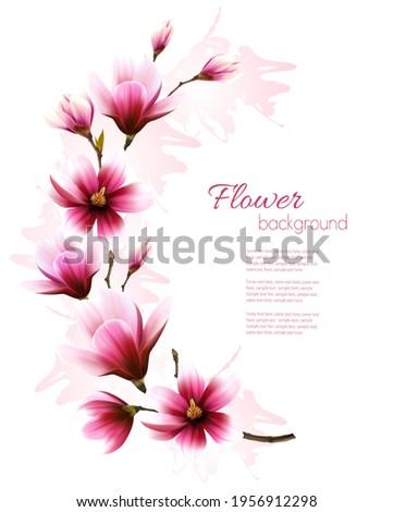 Beautiful pink magnolia background. Vector.