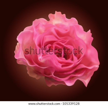 Beautiful pink rose isolated on deep brown background vector illustration