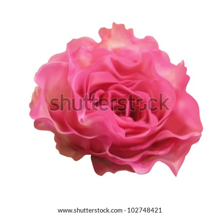 Beautiful pink rose isolated on white background vector illustration