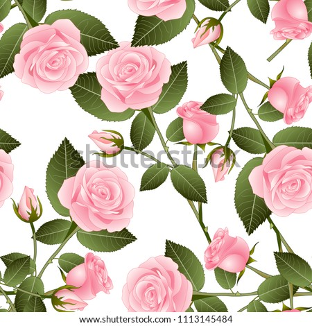 beautiful pink rose   rosa on