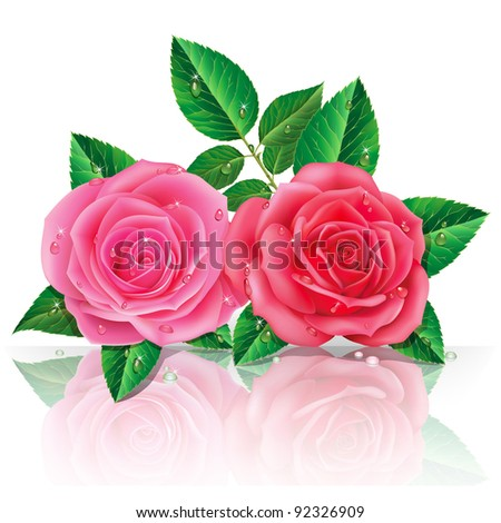 beautiful pink roses. Vector illustration.