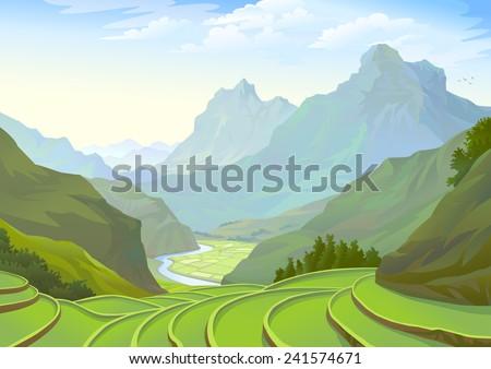 beautiful plantation fields in