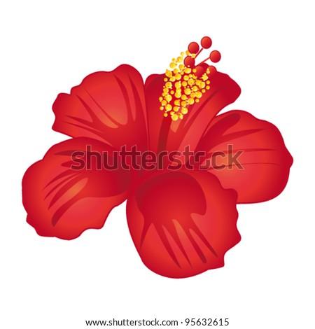 Beautiful red hibiscus flower. Vector illustration.