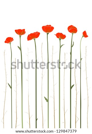 Beautiful Red Poppies Illustration. Vector decorative poppies and grass illustration. EPS8.