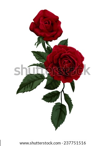 beautiful red rose isolated on