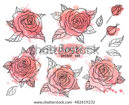beautiful roses set drawing