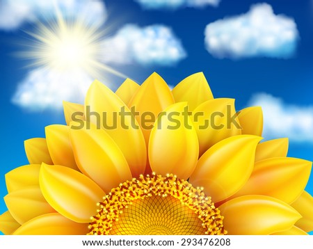 beautiful sunflower against