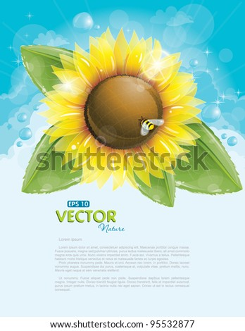 beautiful sunflower and green