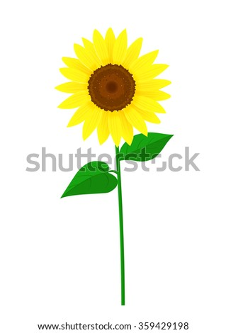 beautiful sunflower with green