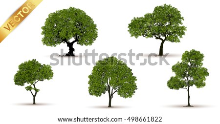 Shutterstock Beautiful tree on a white background,Isolated vector tree,Isometric trees in vector,tree with a realistic, Tree branch with green leaves over white background.Vector graphics. Artwork design element.