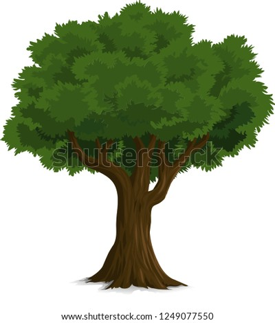 Beautiful tree on a white background, trees illustrations. Can be used to illustrate any nature or healthy lifestyle topic, illustration with high pines in fir trees forest isolated on white