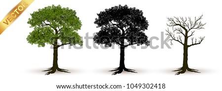 beautiful tree realistic  on a