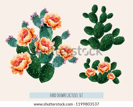 Beautiful vector floral summer tropical illustration background with blooming cactuses. Perfect for wallpapers, web page backgrounds, surface textures, textile. Isolated on white background.