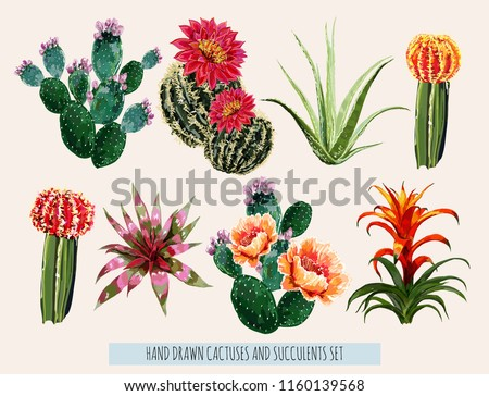 Beautiful  vector floral summer tropical illustration set with blooming cactuses, succulents. Perfect for wallpapers, web page backgrounds, surface textures, textile. Isolated on white background.