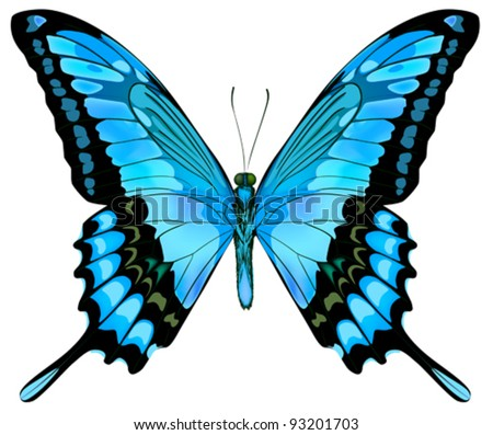 beautiful vector isolated blue