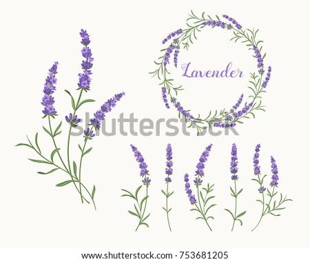 beautiful violet lavender