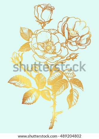 beautiful wild rose isolated