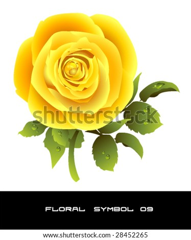 beautiful yellow rose vector