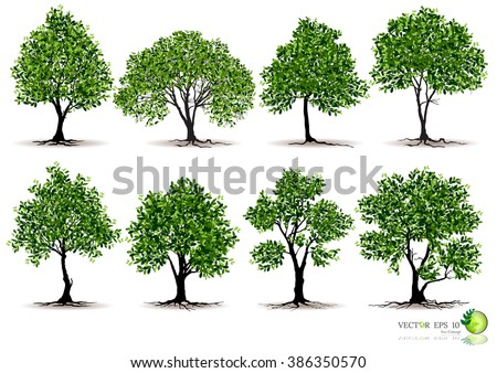 Shutterstock Beautifull tree on a white background,Isolated vector tree,Isometric trees in vector,tree with a realistic, Tree branch with green leaves over white background.Vector graphics. Artwork design element.