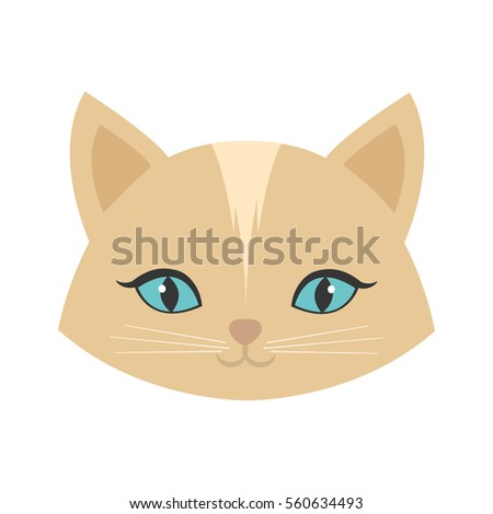 beauty face cat female blue