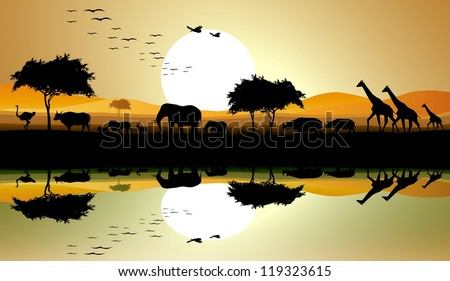 beauty silhouette of safari